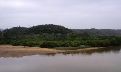 慶佐次湾のヒルギ林6
